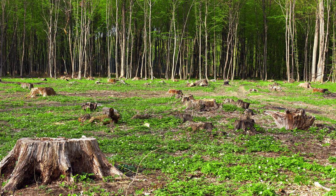 4 países de Latinoamérica en la lista de los más devastados por la  deforestación - Busca ya la nueva edición 2020-2021